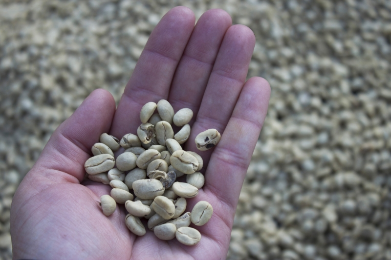 Raw Coffee Beans_1