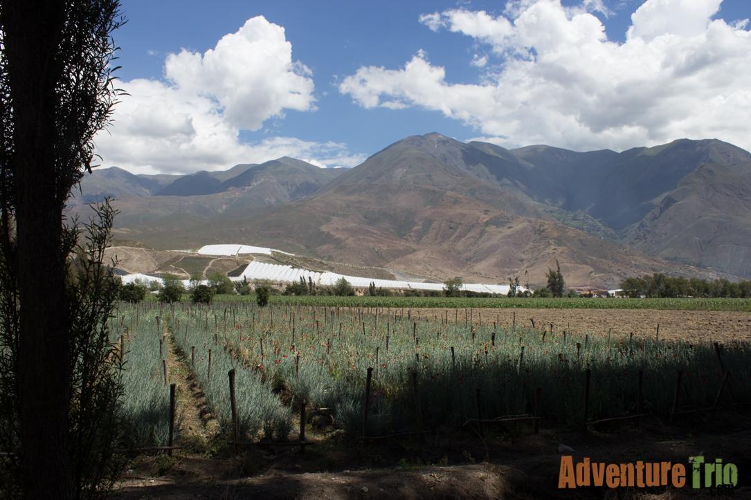 Peru Part 1 through Lima-37